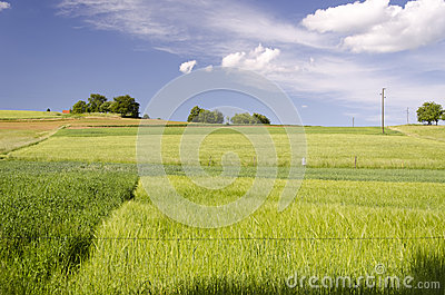 Fields in spring