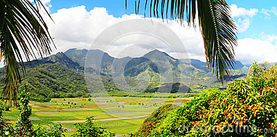Fields of Taro, Hanalei Valley, Kauai, Hawaii