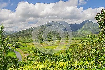 Fields of Taro, Hanalei Valley, Kauai, Hawaii