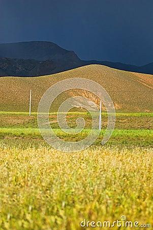Fields in Tibetan landscape