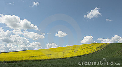 Fields under blue sky