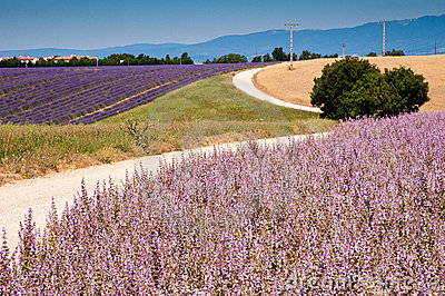 Fields in Valensole