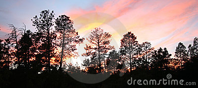 A Fiery Sunset Over Ponderosa Pines