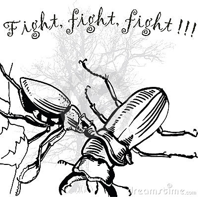 Fight, fight, fight - bugs