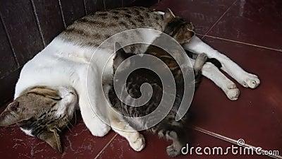 Figlarka sen z mamą na podłoga zbiory