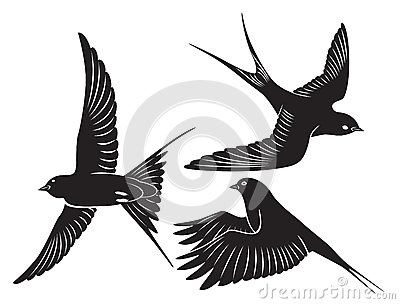 Bird swallow