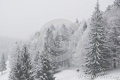 Figures walking in winter forest