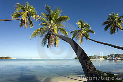Fiji - Leaning Palm Trees - South Pacific