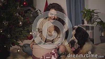 Fijne Kaukasus die op de vloer zit met Sint Bernard en cadeaudoos opent Menselijk en dierlijk rusten op New stock video