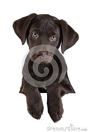 Filhote de cachorro acima da bandeira