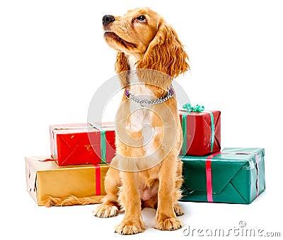 Filhote de cachorro e presentes