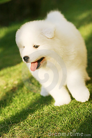 Filhote de cachorro engraçado