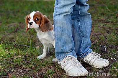 Filhote de cachorro escondendo
