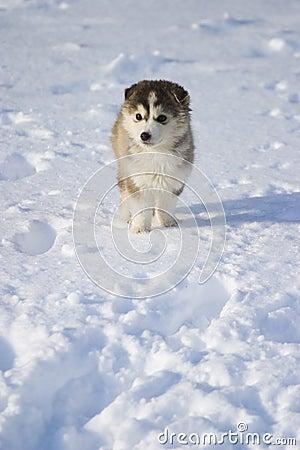 Filhote de cachorro na neve