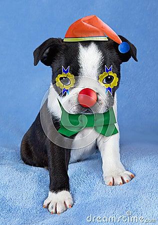 Filhote de cachorro que Clowning ao redor