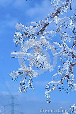 Filialer som täckas med is