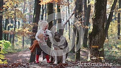 Fille et crabot Belle femme jouant avec son chien Enfant et crabot Fille jouant avec le chien dans la petite fille de forêt avec banque de vidéos