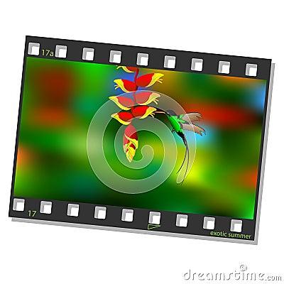 Film frame with hummingbird