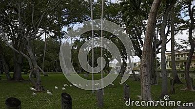 Filmaufnahmen von Manatee Bend Park Miami FL stock footage