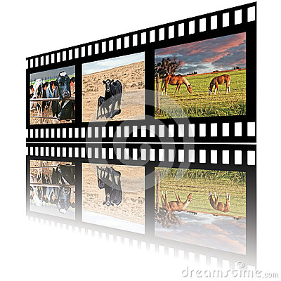 Filmstrip of Domestic Farm Animals