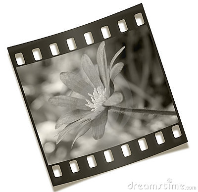 Filmstrip Flower Negative