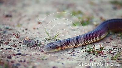 Fim obscuro acima da serpente que desliza à câmera filme