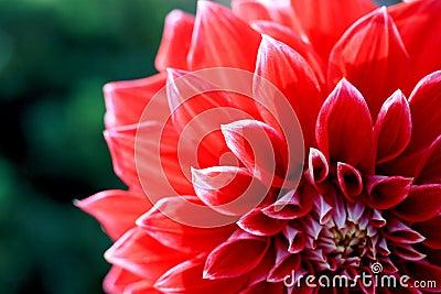 Fin inconnue de fleur vers le haut