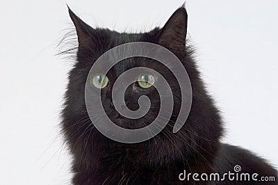 Fin vers le haut de chat noir
