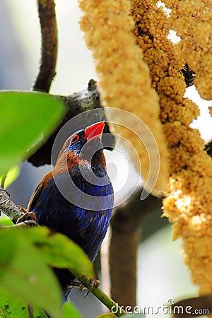 Finch bird eating