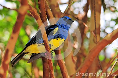 Finch (passerine) bird on branch