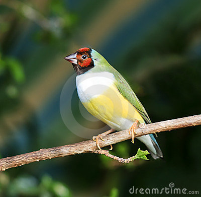 Free Finches Sitting On A Branch In The Forest Stock Photography - 23975552