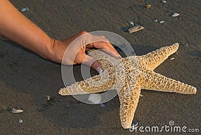 Finden von einem Seastar