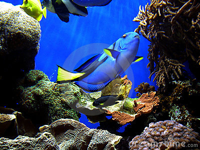 Finding Nemo's Dory