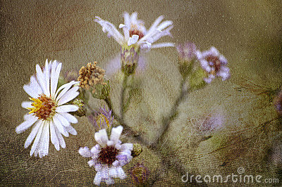 Fine Art Flower Royalty Free Stock Image - Image: 23016696