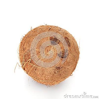 Fine coconut