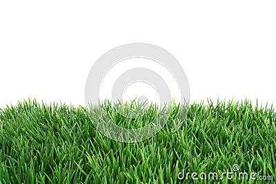 Fine Green Meadow