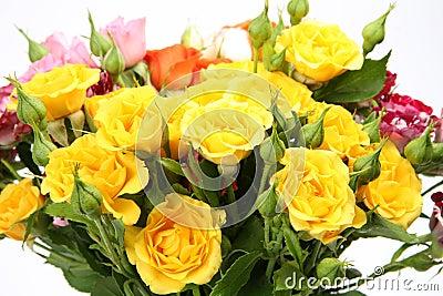 Fine roses