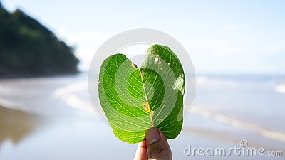 Finger holding a leaf at the beach of the sea Stock Photo
