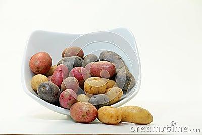 Fingerling Potatoes (Solanum tuberosum)