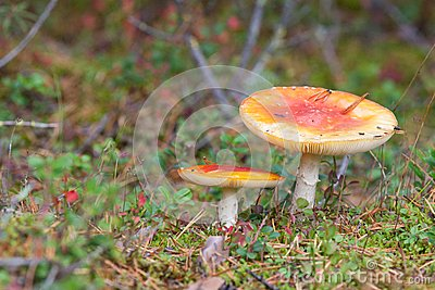 Finland mushrooms