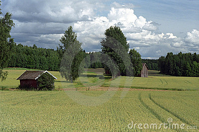 Finnish grain fields