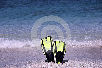 Fins on the the beach