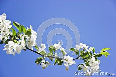 Fiore