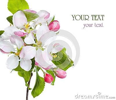 Fiore del Apple