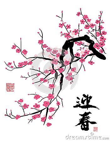 Fiore di ciliegia nella sorgente
