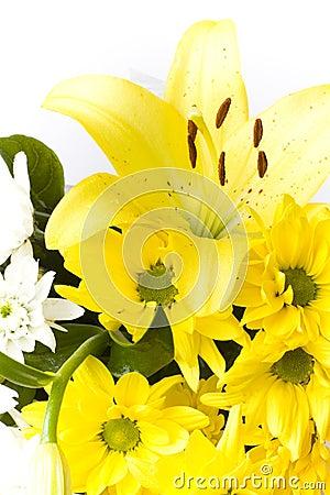 Fiori bianchi e gialli del lilium e del geranio fotografia for Nomi fiori bianchi e gialli