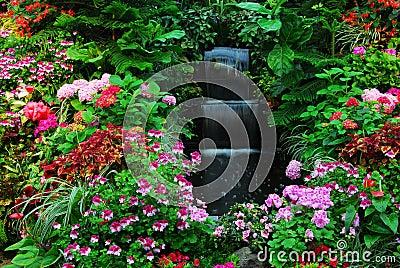 Fiori cascata in giardino immagini stock libere da for Cascata giardino