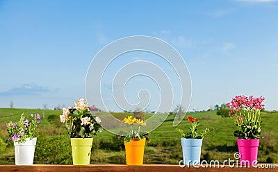 Fiori conservati in vaso