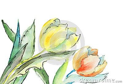 Fiori dei tulipani