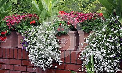 Fiori del balcone immagini stock libere da diritti for Fiori balcone perenni